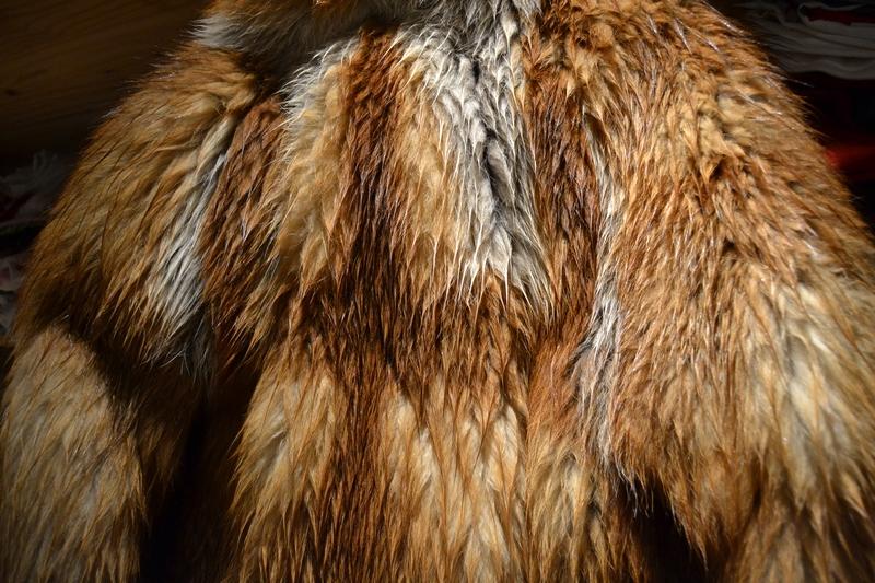 comment-secher-fourrure-pluie-1